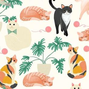 Cats - Cream