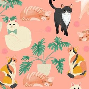 Cats - Lt Coral
