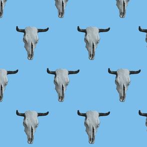 West Texas Steer Skulls