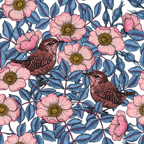 Wrens in the roses