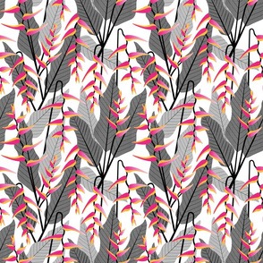 heliconia gray+pink2