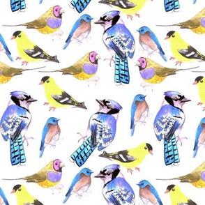 birds in tetrad color scheme- blue jays, bluebird, goldfinch, gouldian finch