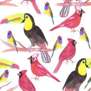 Toucans, gouldian finch and cardinals-birds in tetrad color scheme