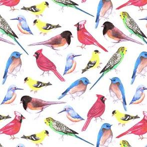 birds in tetrad color scheme- Red cardinals, Eastern bluebirds, junco, budgies, kingfisher, american goldfinch,