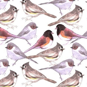 titmouses bushtits and juncos in brown tints and shades