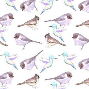 Backyard Birds in light color scheme- bushtits, hummingbirds and tufted titmouse