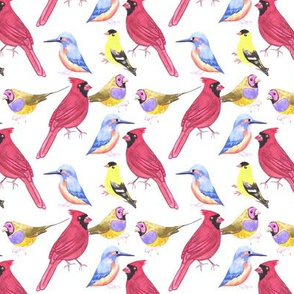 watercolor birds in triad color scheme- Red, blue, yellow