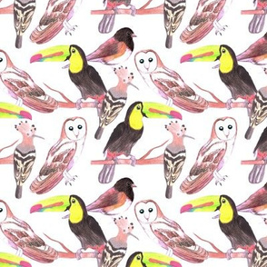 large colorful watercolor birds- barn owls, toucan, hoopoe, junco, dark eyed junco,