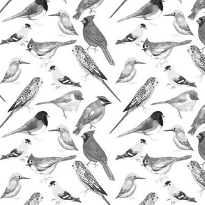 Black and white watercolor backyard and pet birds