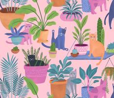 Indoor cats paradise