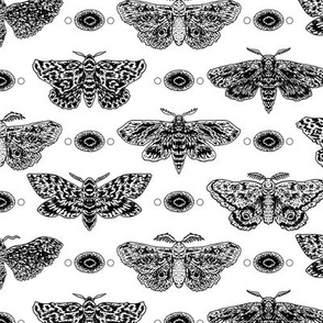 Moths on a white background