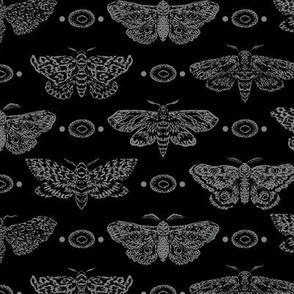 Moths on a black background
