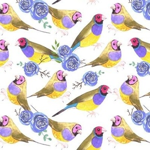 Red headed male Gouldian finches and roses or Erythrura gouldiae bird seamless watercolor birds painting