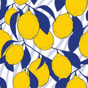 Macro Modern Lemons