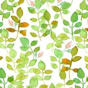 Leafy Rosebuds