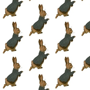 Peter Rabbit Alone  on White