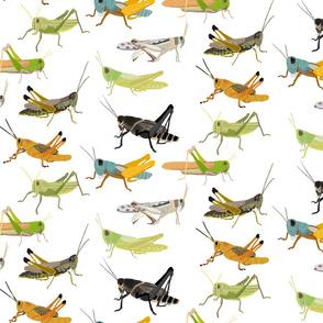 grasshopperrepeat