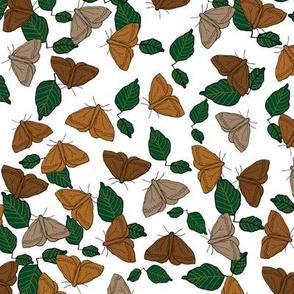 Brown Moths On Leaves SF Challenge