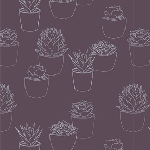 Succulents in Pots - outlines
