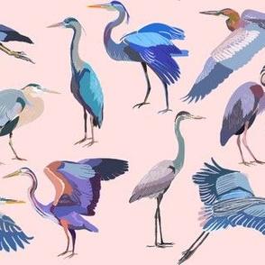 Herons Pink
