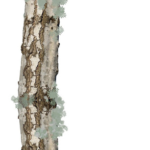 Birch Bark Border