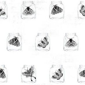 Moths in the Jars V03