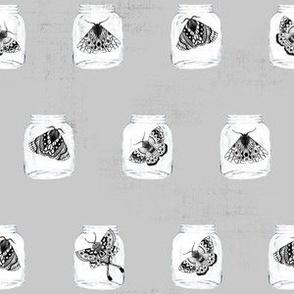 Moths in the Jars V03 Gray