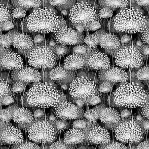 Black and White Dandelions 50