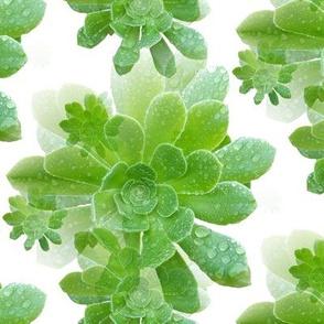 Vibrant Green Succulents