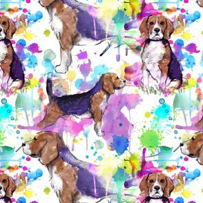beagle repeat medium