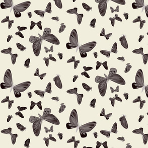 small - moths in dark brown on natural
