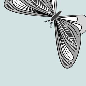 large - moths in black and white on light blue