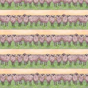 sunrise sheep stripe