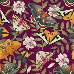 Royal Moths Plum