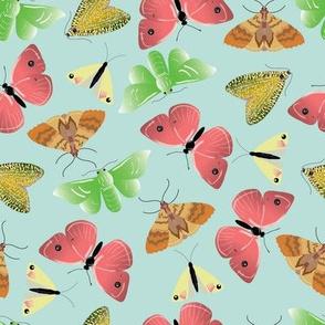 Moth & Butterflies
