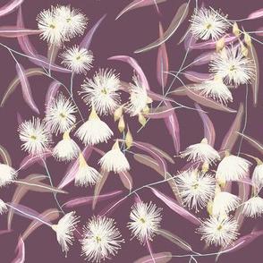 Flowering gum tree - purple