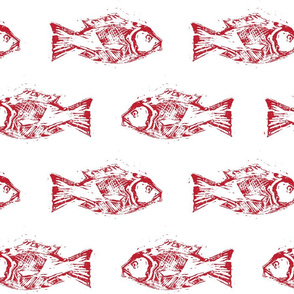 SNAPPER FISH RED ON WHITE