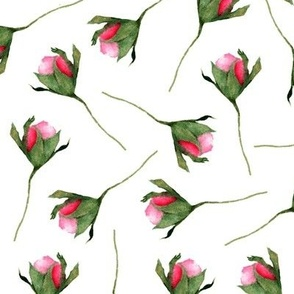 rosebud on white background