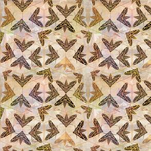 Sphinx Moths _ Night Mysteries