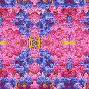 hyacinth medley