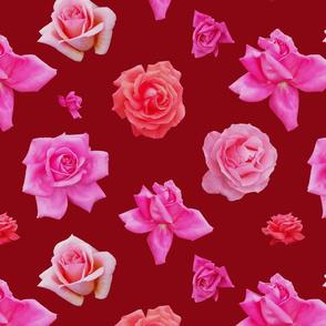 Pink roses on burgundy