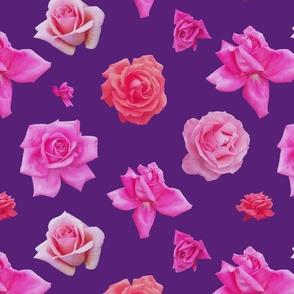 Pink roses on purple