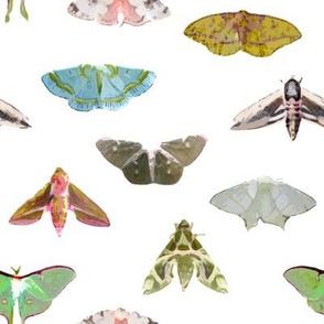 Lovely Lepidoptera