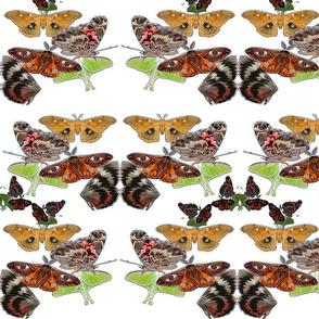 moths decor