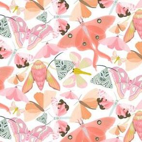 Pink Moths - White
