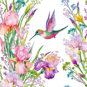 hummingbirds and irises