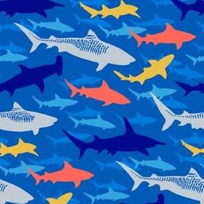 tiger beach sharks - blue