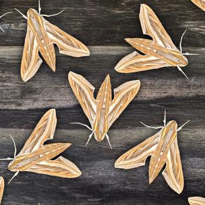 Golden Deco Moths