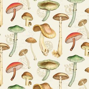 More Mushrooms Natural: Large