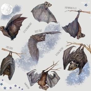 Bats Fly At Full Moon